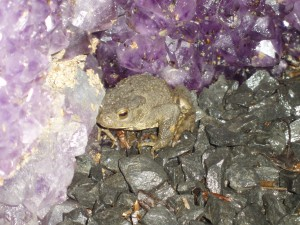 A toad (somewhere rather magical...)
